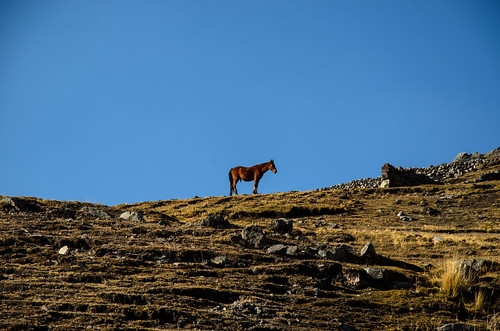hiking peru mountain horse southamerica ausengate pacchanta