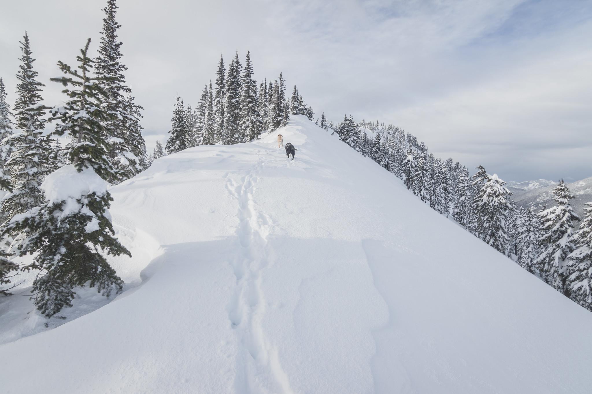 The final stretch on Pratt Mountain