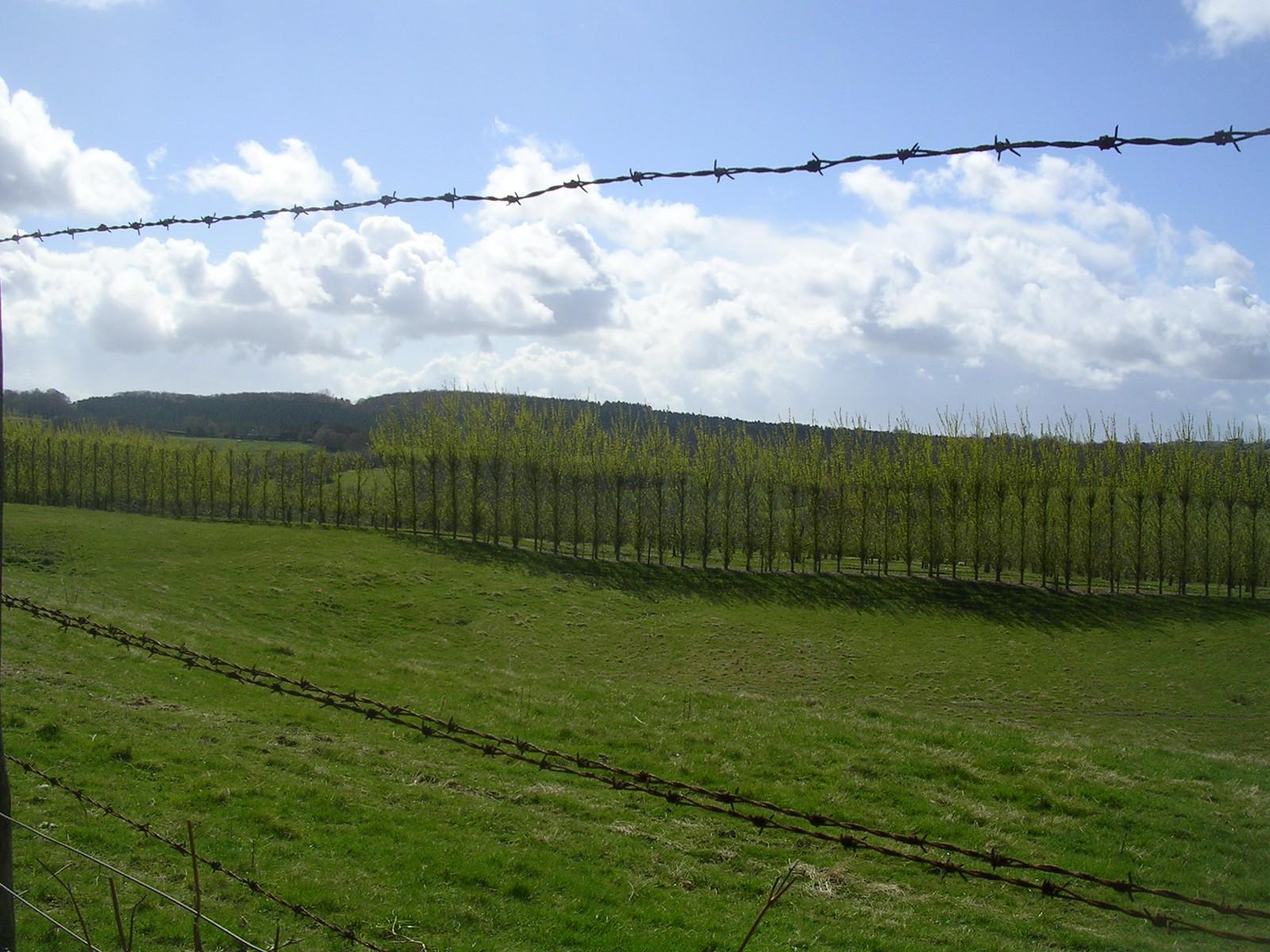 shelter belt through fence Robertsbridge to Battle