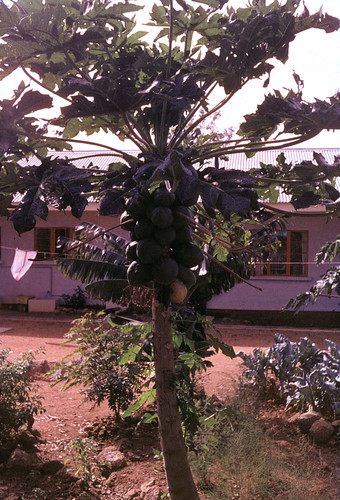 family house building vintage garden plateau nigeria pawpaw ruthflickr