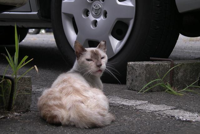 Today's Cat@20080816