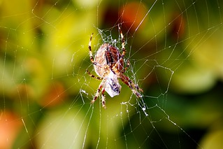 Spider web | by @Doug88888