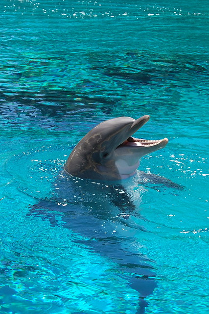 Dolphin at the Mirage