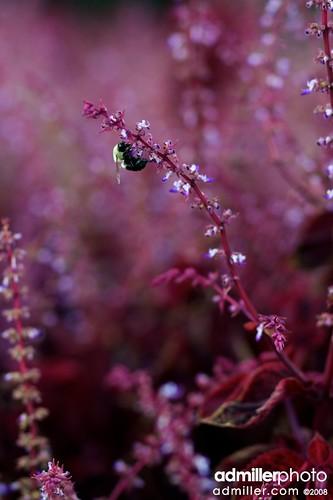 flowers flower canon bokeh potd bee pensacola 40d