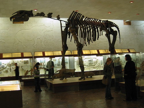 Indricotherium, an extinct herbivore mammal from the Oligocene