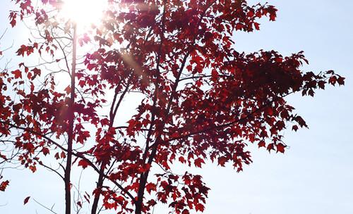 fall light | by SouleMama
