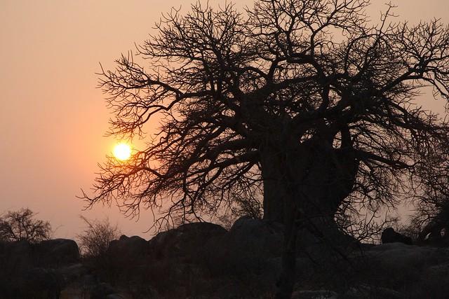 Baobab al tramonto