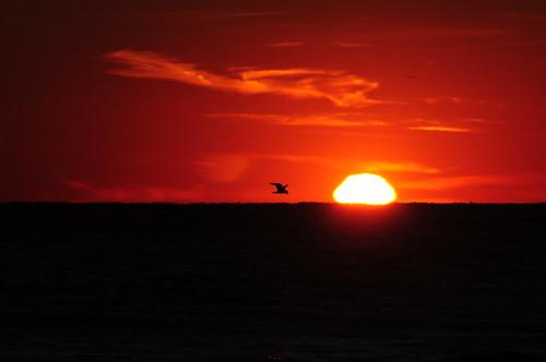2009 xxxxxx birds clouds d300 fins fireisland imran imrananwar jfk longisland newyear newyork nikon planespotting red sky sunset