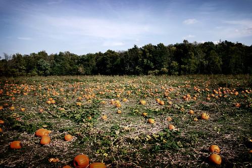sky fall mill field clouds farm pumpkins cider kansas patch louisburg