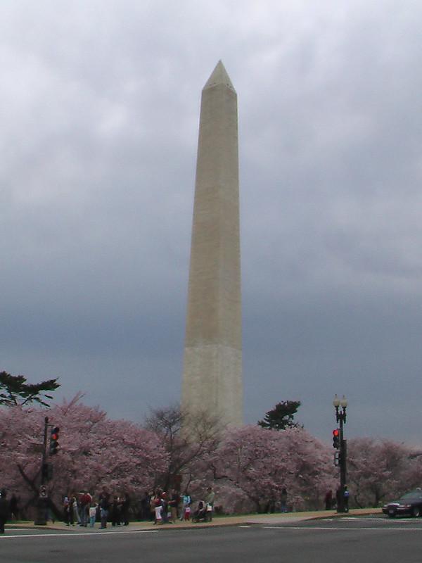 Cherry Blossom Time at the Tidal Basin, Washington, D.C., March 2008 (pingnews)