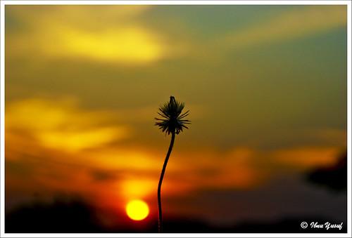 sunset alone sundown awesome explore malaysia chapeau a200 selangor shahalam section7 lakegarden cherryontop golddragon sonydslr mywinners abigfave anawesomeshot ibnuyusuf dragongoldaward mysonia wildtropicalflower