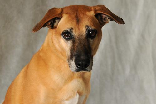 Payton 206 | by Save-A-Pet Adoption Center