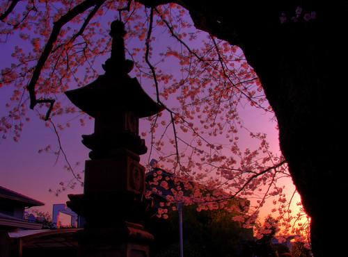 japan sunrise temple sakura odawara kanagawa hdr 小田原 無量寺 photomatix muryoji muroji