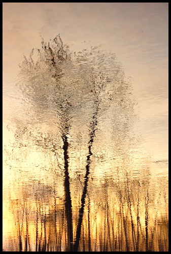 reflexion trees | by Melle plante