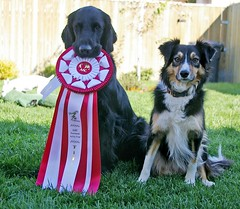 Gyp and the scary ribbon, part 2. | by sarah ...