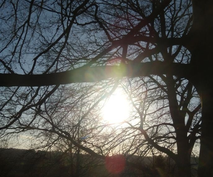 Sun through trees Guildford Circular