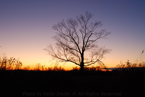 statepark pink trees sunset ohio red orange tree nature colors silhouette yellow nikon colorful purple silhouettes waynesville caesarcreek warrencounty tamron28300 caesarcreekstatepark harveysburg d80 nikond80 geotaggedohio waynesvilleoh harveysburgoh hollyannsmith photobyhollyannsmith