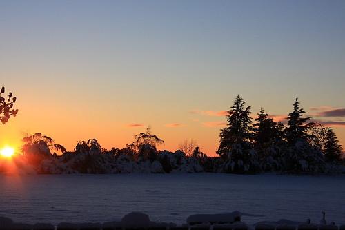 reveley somerslea dawn tree trees sunrise sun morning daybreak crisp 0views canon eos 40d canoneos canon40d eos40d canoneos40d newzealand nz southisland canterbury canterburynz mtsomers mountsomers snow winter june mareeareveley mareeareveleyphotography