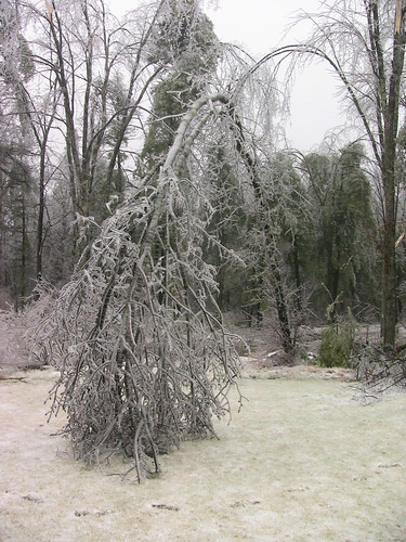 Down Tree During New England Ice Storm 2008 | by mccready