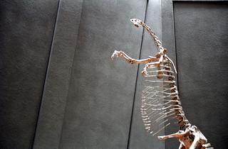 Extinct megafauna