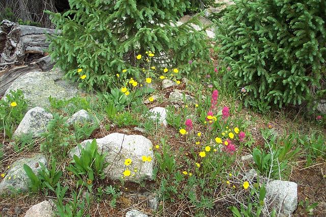 Hagerman Pass wild garden