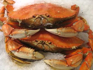 Crabs!   by wanderingone