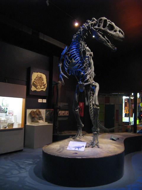Allosaurus Canterbury Museum