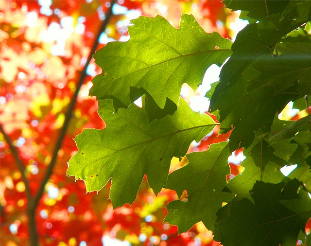 Green and Red Autumn