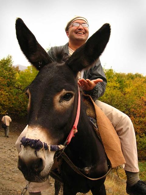 Donkey Business!
