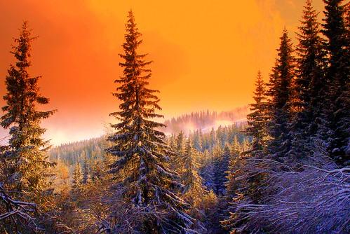 Magic Forest   by Stella VM