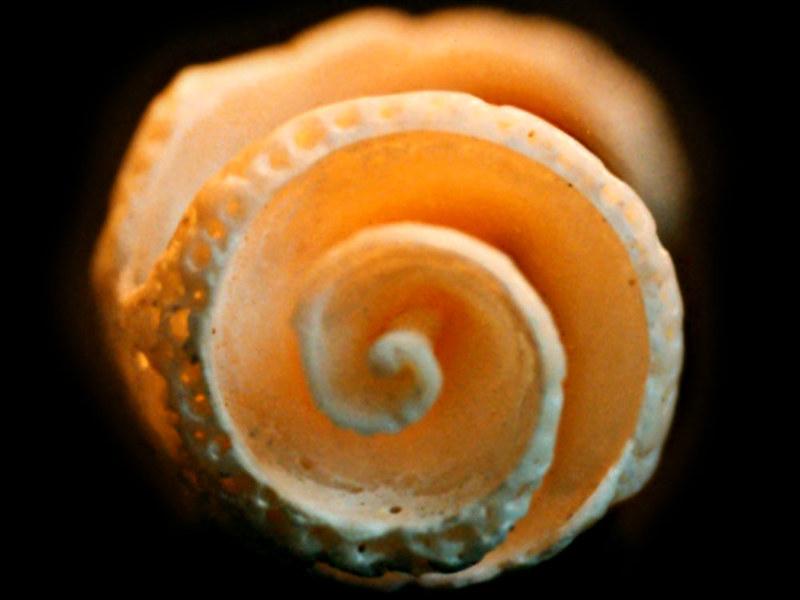 Espirales premexicas 38