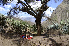 Resting under what seemed the only tree in the canyon - Huancayo-Ayacucho road