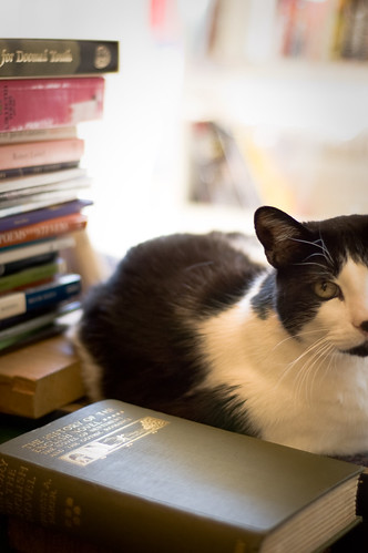 Bookstore Kitty | by Todd Kulesza