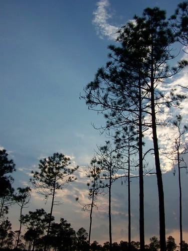 trees sunset sky clouds mississippi crane wildlife national sandhill refuge