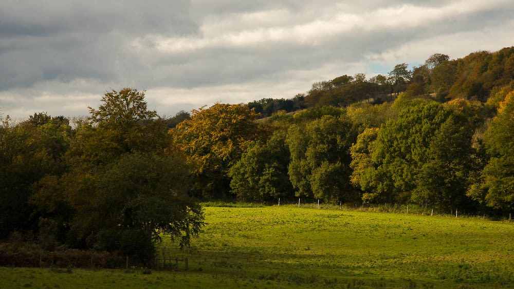 Old Simm's Copse on the North Downs