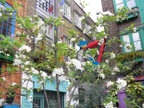 spring blossom in Neal's Yard