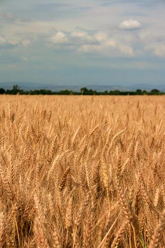 oats farmington