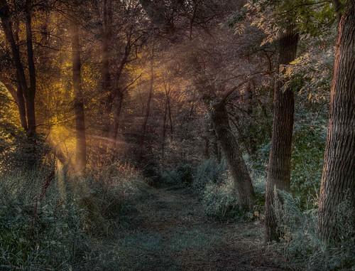 trees usa grass leaves fog landscape northdakota rays fargo lindenwoodpark