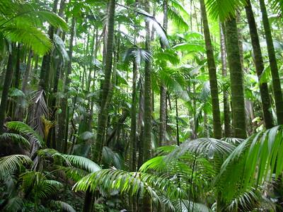 Palm Jungle - Hawaii Tropical Botanical Garden