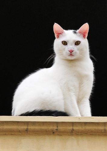 Hey, I see you! ...  Cat / Katze   by Habub3