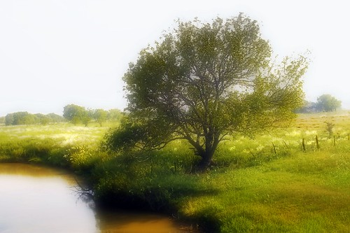 Tree Planted By The Water | by Big Grey Mare