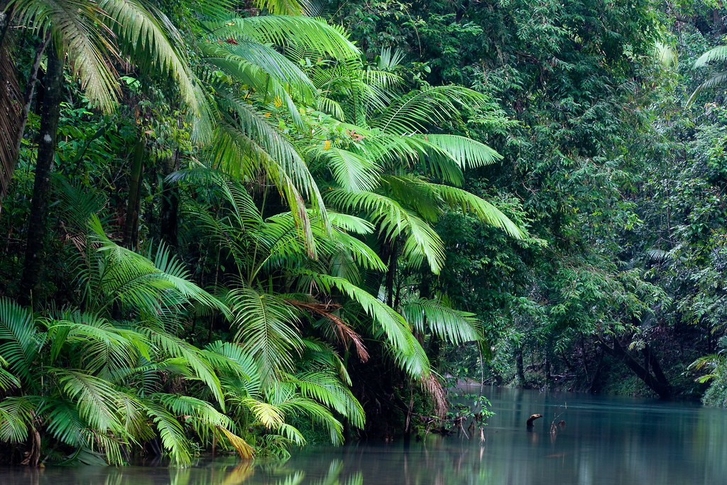 800px-thornton_peak2c_daintree_national_park