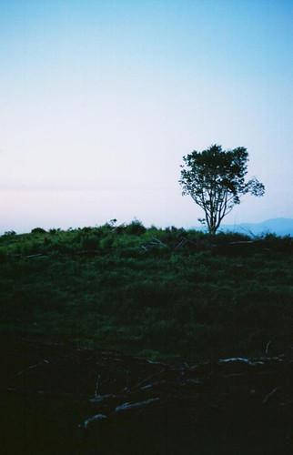 sunset tree vista appalachiantrail trail:name=appalachiantrail trail:mile=258