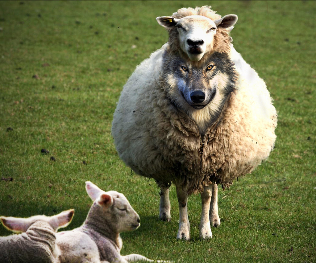Wolf in Sheeps clothing | Jay Free | Flickr