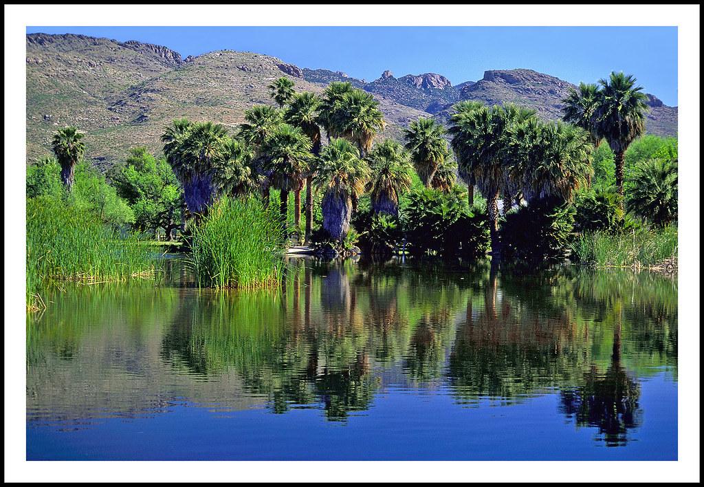 Agua Caliente Park in Tucson, Arizona - 1998 by sjb4photos