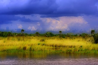 Florida Everglades | by minds-eye
