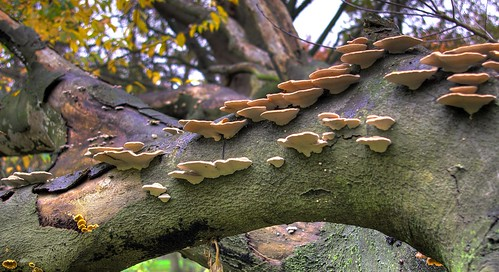 Fungi HDR | by Cigaro