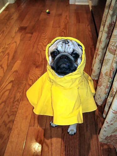 milo raincoat | by scissorkix
