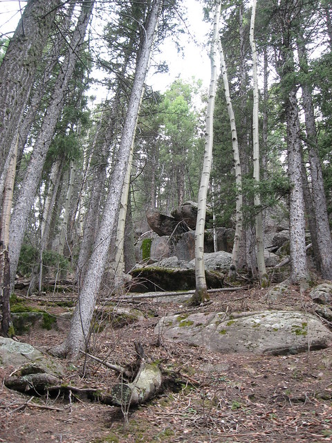 Boulder strewn forest