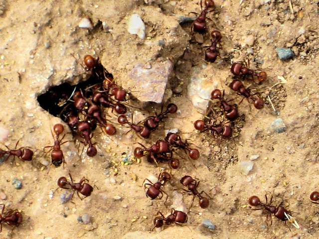 Ants on Southern Ave